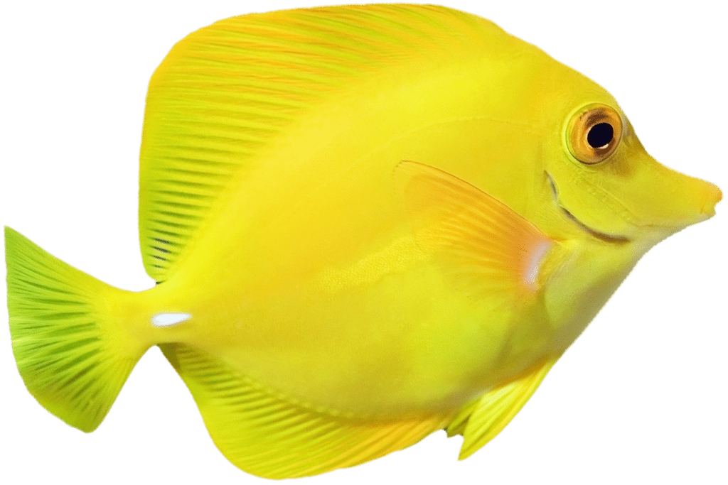 Bright yellow fish swimming to the right