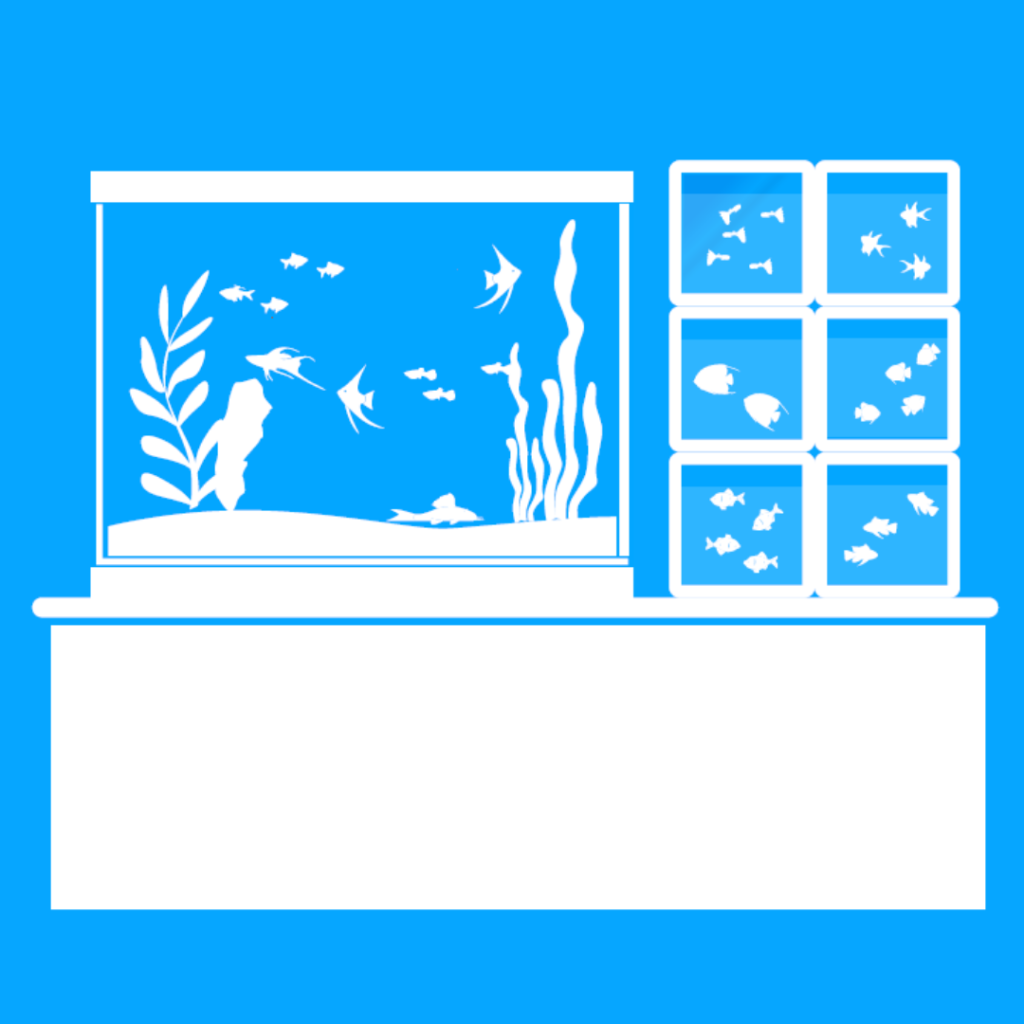 Choose and buy new fish